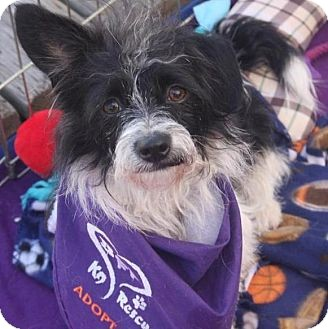 Terrier (Unknown Type, Small) Mix Dog for adoption in Salt Lake City, Utah - BENNIE