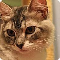 Adopt A Pet :: Jellie - Pensacola, FL