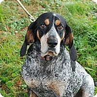 Adopt A Pet :: Smokey - ADOPTION PENDING - Derry, NH