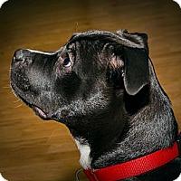 Adopt A Pet :: Bruno - Abandoned at 1 wk. - Villa Rica, GA