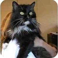Adopt A Pet :: Trina - Arlington, VA