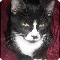 Adopt A Pet :: Kilo - Mesa, AZ
