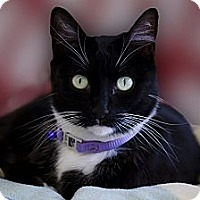 Adopt A Pet :: Mitzi - El Cajon, CA