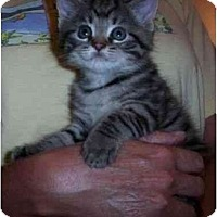 Adopt A Pet :: Chloe - Reston, VA
