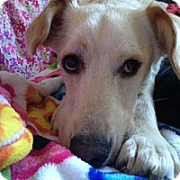 Adopt A Pet :: Marley - Los Angeles, CA