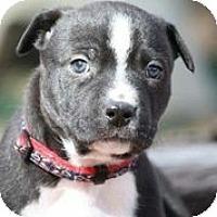 Adopt A Pet :: Arielle Gold - Austin, TX