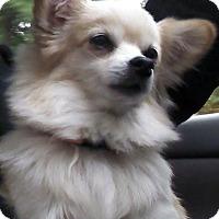 Adopt A Pet :: Baby - Gig Harbor, WA