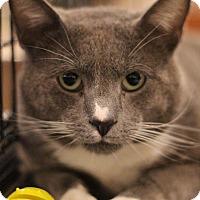 Adopt A Pet :: Owen - Sacramento, CA