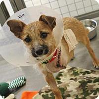Adopt A Pet :: Rhubarb - Smyrna, GA