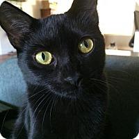 Adopt A Pet :: Iva (JZ) - Orlando, FL