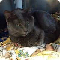 Adopt A Pet :: Pepper - Chippewa Falls, WI