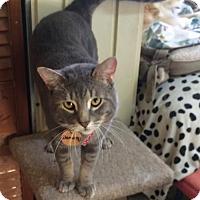 Adopt A Pet :: Damien - Montreal, QC