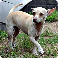 Adopt A Pet :: Jasper - Tavares, FL