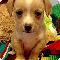 Adopt A Pet :: Wilson (ARSG) - Santa Ana, CA