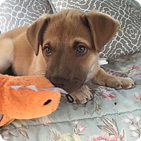 Adopt A Pet :: Bettye - Knoxville, TN