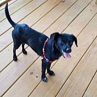 Adopt A Pet :: Lyly - Gretna, FL