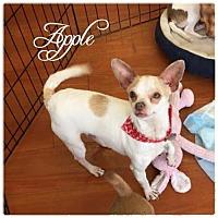 Adopt A Pet :: Apple - Hope, BC