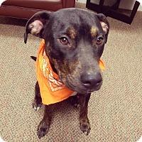 Adopt A Pet :: Truman - Alexandria, VA