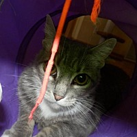 Adopt A Pet :: Muffy - Prescott, AZ