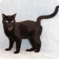 Adopt A Pet :: Getty - Encinitas, CA