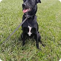 Adopt A Pet :: A - JASMINE - Ann Arbor, MI