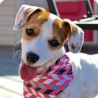 Adopt A Pet :: Pumpkin - Aubrey, TX