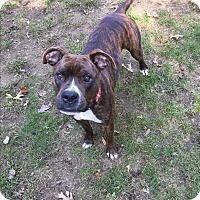 Adopt A Pet :: Jack - Peace Dale, RI