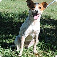 Adopt A Pet :: Riley - Parsons, KS
