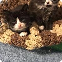Adopt A Pet :: Carmax - New York, NY