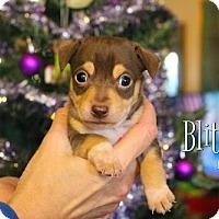 Adopt A Pet :: Reindeer gang! - Benton, LA