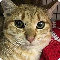 Adopt A Pet :: Ginger Boy - Savannah, GA
