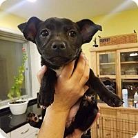 Adopt A Pet :: Quinn - Brookeville, MD