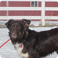 Adopt A Pet :: Steve - Ridgway, CO