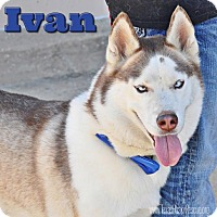 Adopt A Pet :: Ivan--Foster needed! - Carrollton, TX