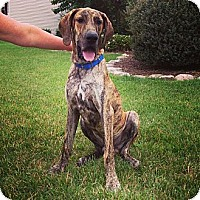 Adopt A Pet :: Diesel - Virginia Beach, VA