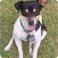 Adopt A Pet :: EAGER - Phoenix, AZ