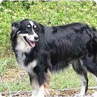 Adopt A Pet :: Sabin - Orlando, FL