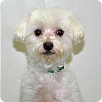 Adopt A Pet :: Frito - Port Washington, NY
