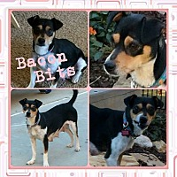 Adopt A Pet :: Bacon Bits - Newnan, GA