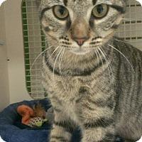 Adopt A Pet :: Hazel - Stafford, VA
