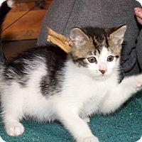 Adopt A Pet :: Nigel - Chattanooga, TN