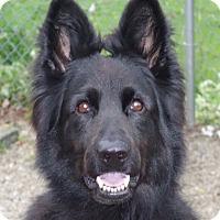 Adopt A Pet :: Nina - Baltimore, MD