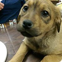 Adopt A Pet :: Atlanta - Ogden, UT