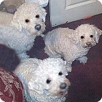 Adopt A Pet :: Harley - East Hanover, NJ