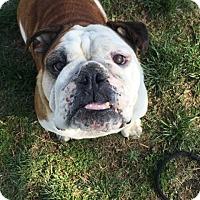 Adopt A Pet :: Betty - Santa Ana, CA