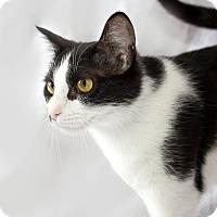 Adopt A Pet :: Mola - Schererville, IN