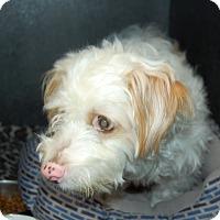 Adopt A Pet :: Archer - Bradenton, FL