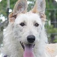 Adopt A Pet :: Marshmallow - Baltimore, MD