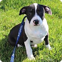 Adopt A Pet :: Tammy - Modesto, CA