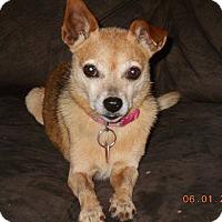 Adopt A Pet :: Lulu - haslet, TX
